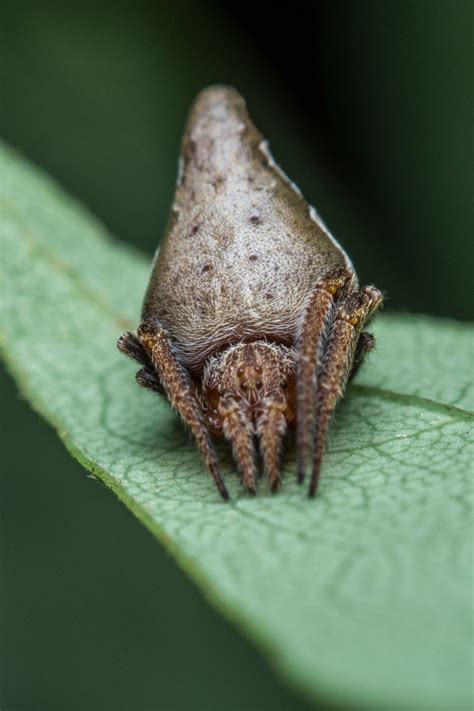 Newly-discovered Spider From India Looks Eerily Similar To