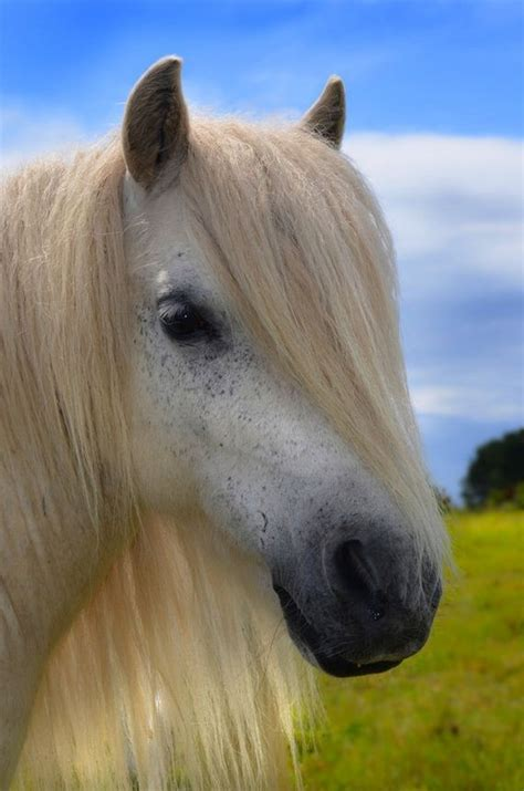 Horses With Better Hair Than You - Barnorama