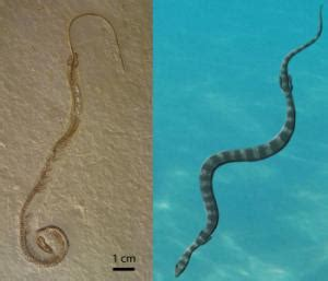 When snakes had legs: New look at rare fossil reveals