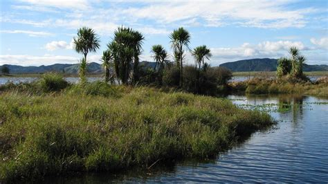 New Zealand's wetlands at risk: 2 February 2018