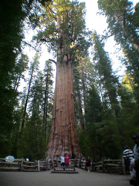 Sequoia National Forest, CA - Hauns Go West
