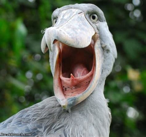 Birds have scary looking mouths - BreakBrunch